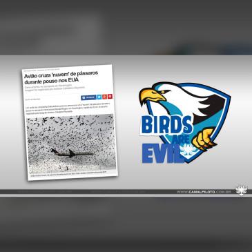 5 considerações sobre o Bird Strike